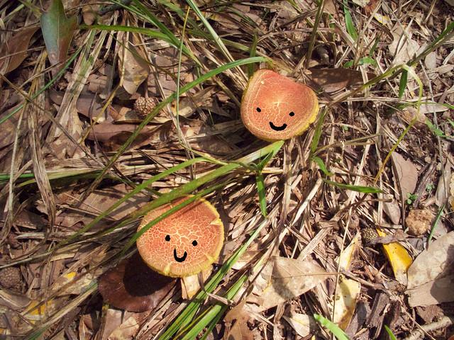 mushrooms-faces-1