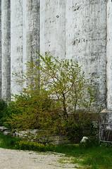 Abandoned Grain Terminal 4