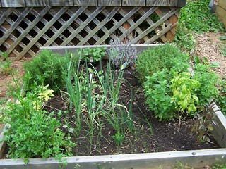 Herb bed, gardening, raised bed, herbs, health, herbal