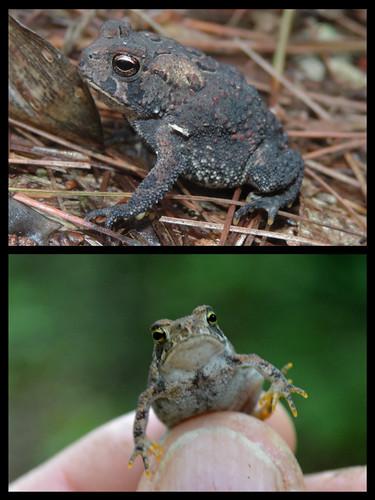 ponk toad