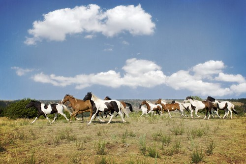 2013 Wild Horse - 09