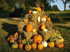 It's our pumpkin pyramid!