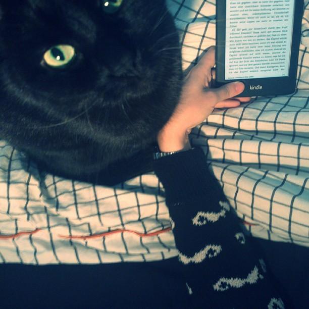 kater #sprock, katniss everdeen, kuscheliges bett. mehr brauche ich heute nicht.