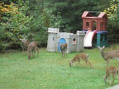 Suburban Deer by Teckelcar