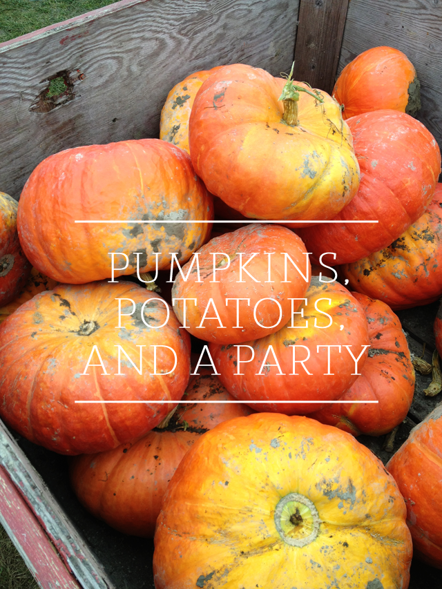 fall inspired photo, orange cinderella pumpkins, pumpkin patch photos, graphic design examples, graphic design work, simple typography
