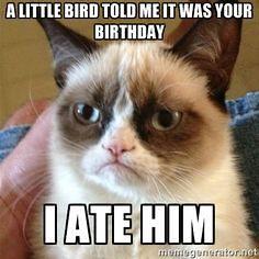 Little bird grumpy cat