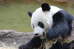 Memphis Zoo 10-28-13 336