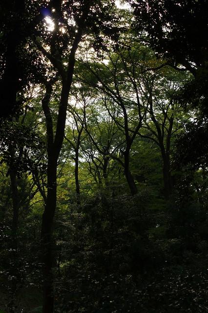 Arisugawa Park PENTAX K-3 02