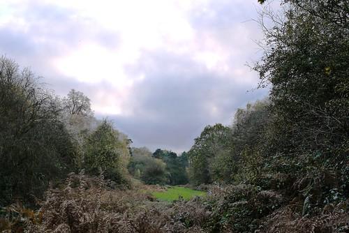 Bridleway, Beechen Wood