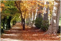 otoño en los Jardines del Príncipe