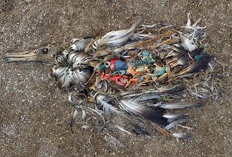 夏威夷中途島上死亡的信天翁鳥,胃裡全是塑膠垃圾。圖片來源:message in the wave