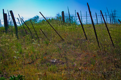 fence - blue