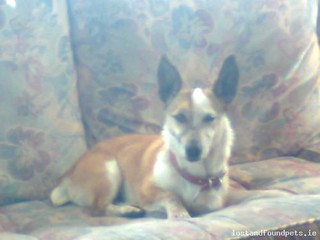 Sat, Dec 7th, 2013 Lost Female Dog - Cherryorchard Ballyfermot, Dublin City