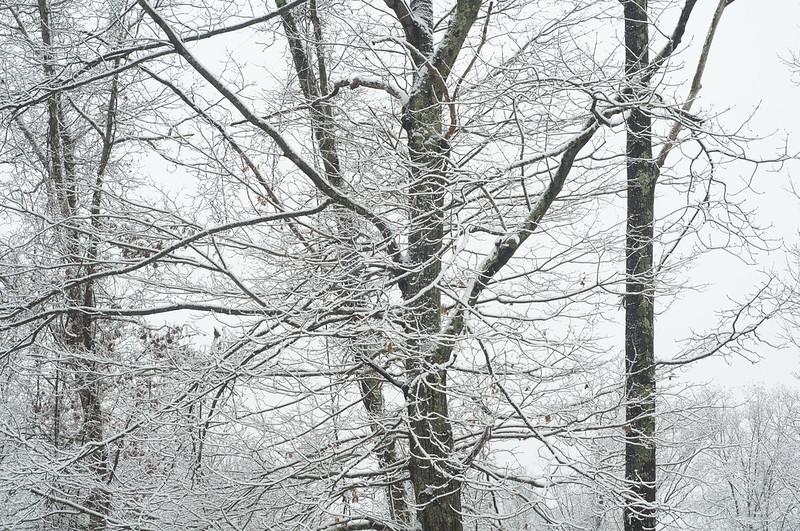 131210_snowwoodshp_038