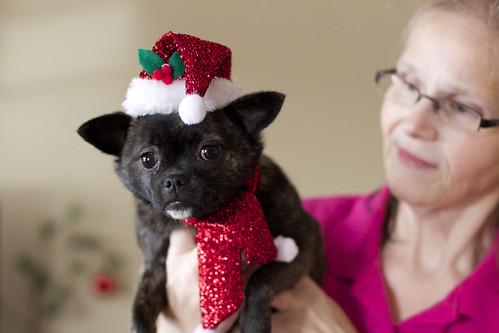 Christmas Zoe