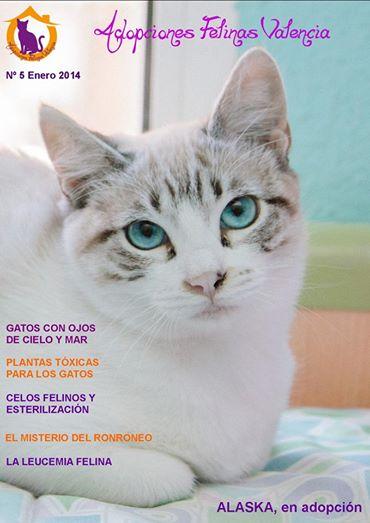 Revista nº 5 Enero 2014: Gatos con ojos de cielo y mar 11933237605_3003e85e82_o
