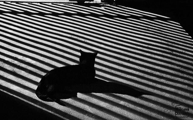 Black Cat by The Gate (Tição No Portão)