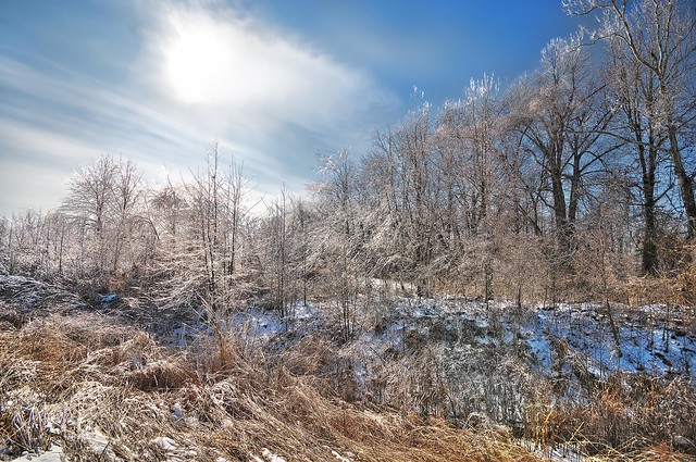Sun and Ice Pennyrile Forest
