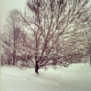 It's getting messy out there! #snowing #newengland #snow #winterwonderland
