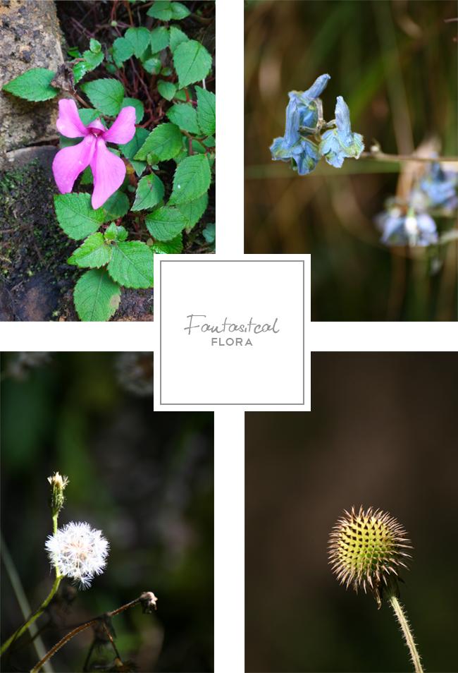 Aberdares flora
