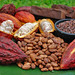 Are You know about Food Of the Gods – CACAO by Stefan Richards