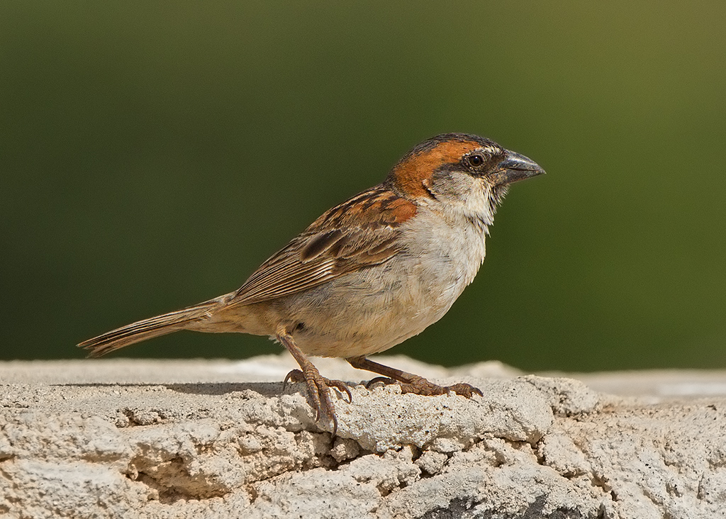 Iago Sparrow 2014-01-15