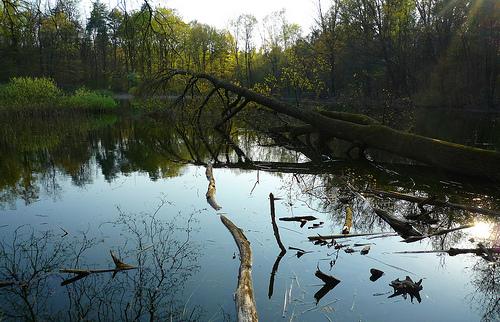 濕地。圖片作者:nene9,圖片來源:http://www.flickr.com/photos/nene9/4543070180/,本圖符合CC授權使用。