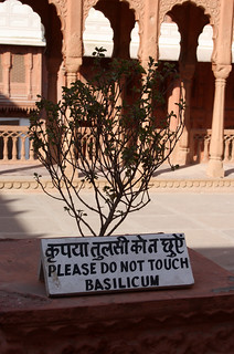 Please do not touch basilicum