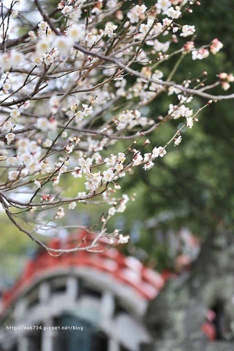 20140301_Fukuoka_0251 f