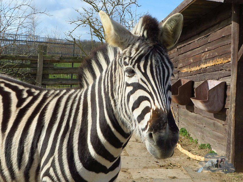 Tierpark Krüzen 15.03.2014