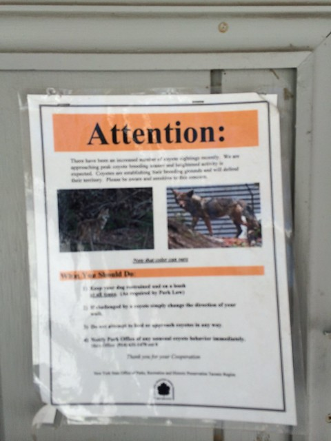 月, 2014-02-17 14:44 - コヨーテ出没注意の張り紙