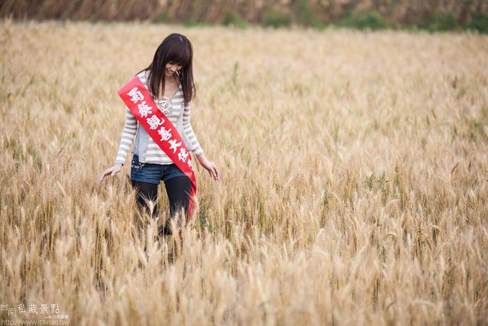 台南私藏景點--學甲寮平和里 X 蜀葵、小麥、羊群、老厝群 (10)