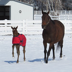 Answer by Daylight's 2014 Filly by Stephen got Even. Foaled at Wayne & Juanita Morris' Winding Creek Farm on March 19th, 2014.