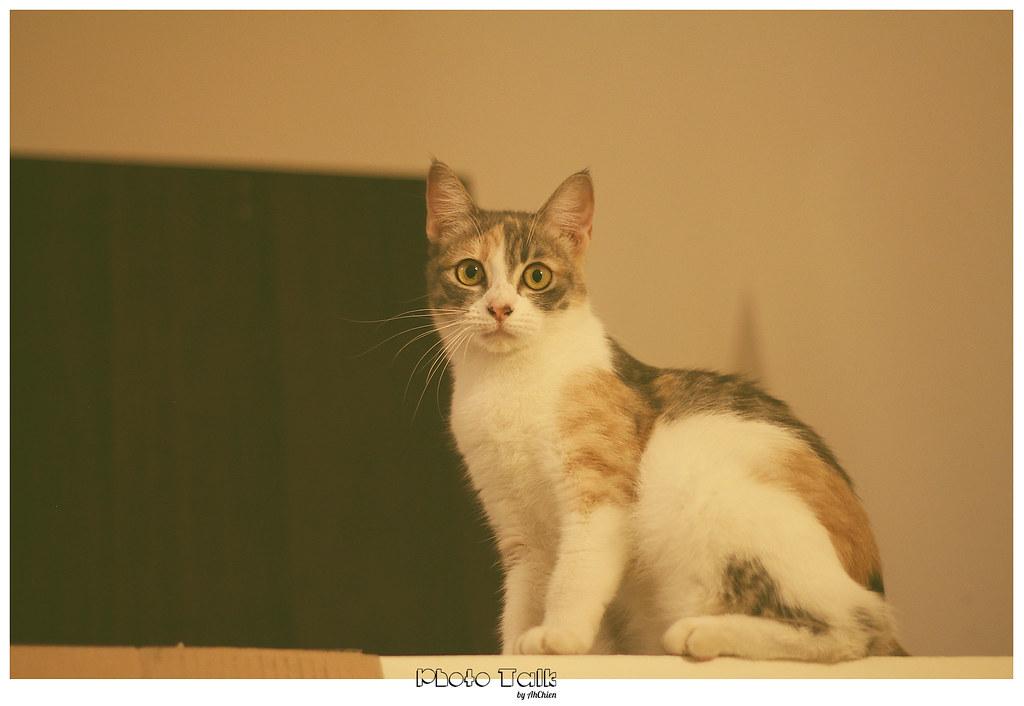 Momo ——  The `Kitten`
