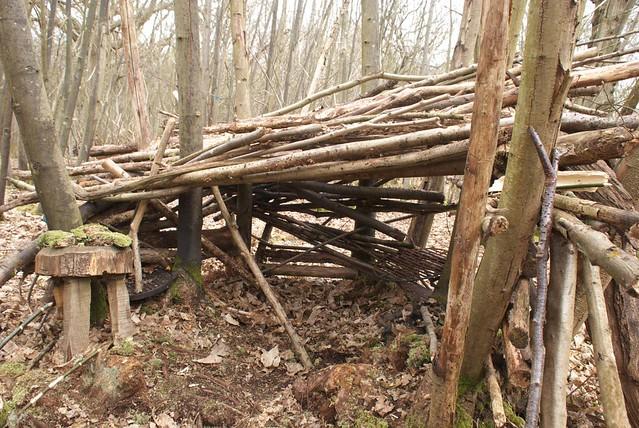 DSC_8235 woodland shelter