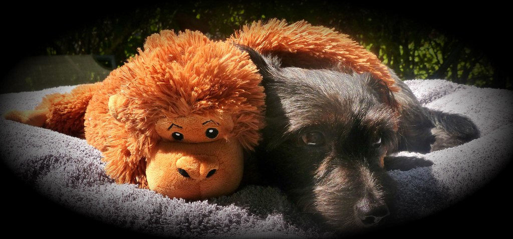 Buddylein and his new friend from the Zoo Dierenpark Emmen :)