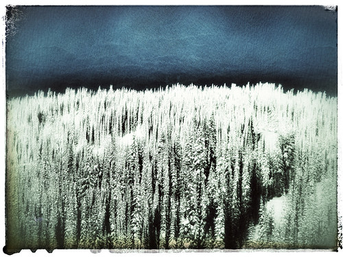 Winter trees in Snapseed