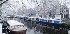 Frosty feelings at the Brouwersgracht