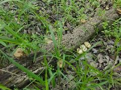 Spring mushroom hunting