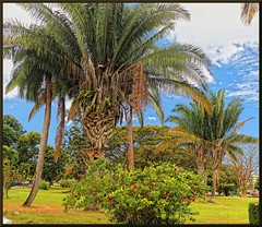 Dominica Botanical Gardens