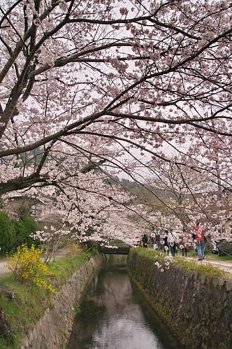 【写真】2013 桜 : 哲学の道/2018-12-24/IMGP9236