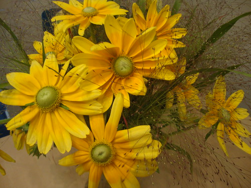 green eyed susans from Princeton Farmers Market