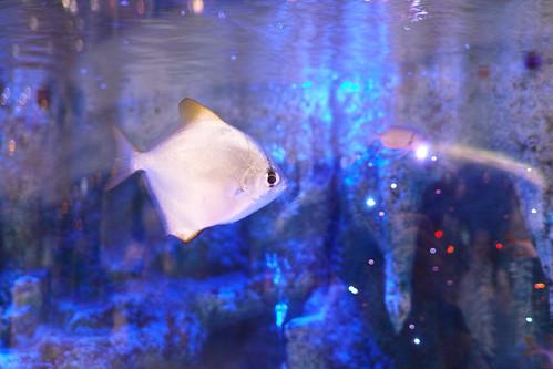 熱帯魚 by leicadaisuki