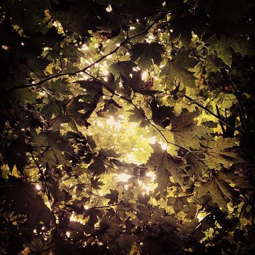 #summer #green #leaves