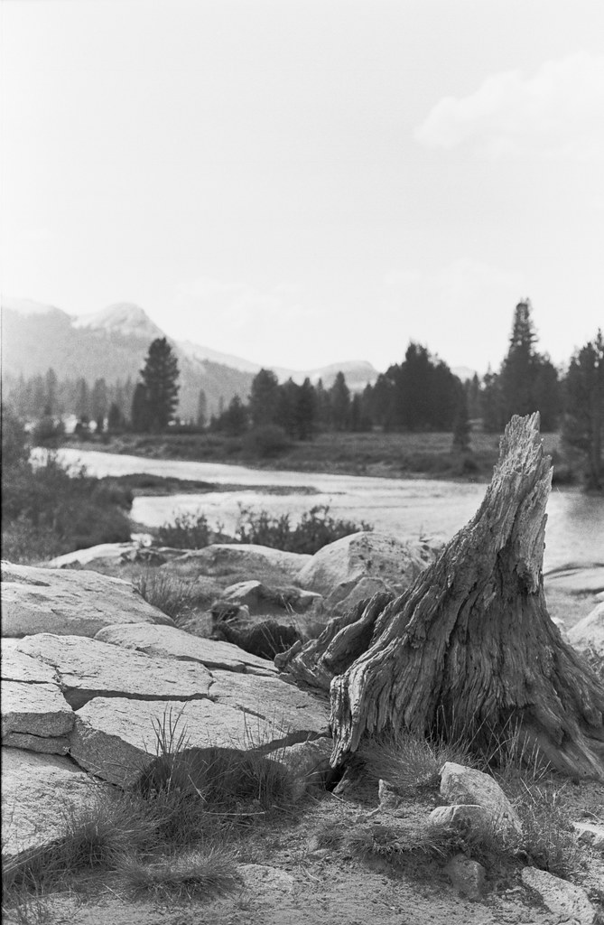 a vertical shot of the touching tree stump in yosemite by a river.jpg