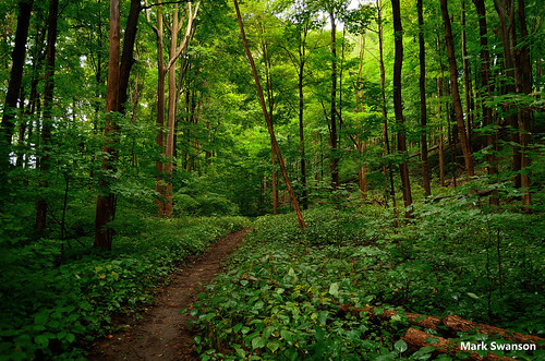 travel trees sunset lake color nature leaves landscape woods nikon michigan greatlakes trail d5100