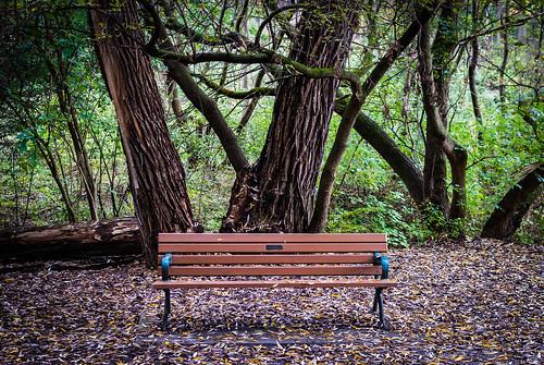 Idyllic ravine bench - #279/365 by PJMixer