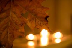 Love Autumn 316/365