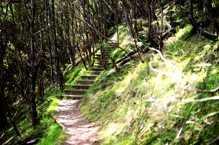 forest-steps a