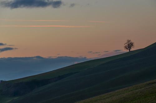 sunset italy tree italia tramonto albero emiliaromagna romagna cesena casalbono